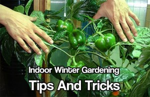 front page - free gardening tips