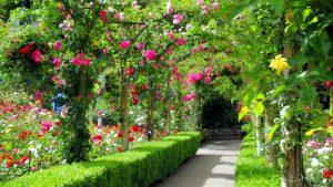 free garden planer 2