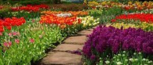 free garden planer 3