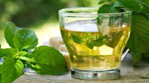 free green tea samples 2