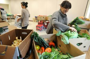 Volunteer Annette Tomasello, right, sorts produce in boxes for a produce giveaway at Peace Neighborhood Center in Ann Arbor on Friday, Sept. 30, 2011. This is the center's fourth week of having produce giveaways. (AP Photo/AnnArbor.com, Angela J. Cesere)