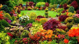 free gardening tips 2