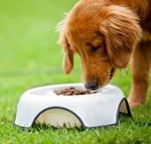 free pet food samples photo