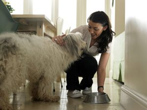 Free Pet Sitting Services 2