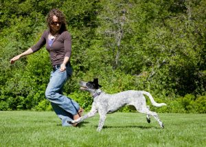 free-things-to-do-with-your-dog-2